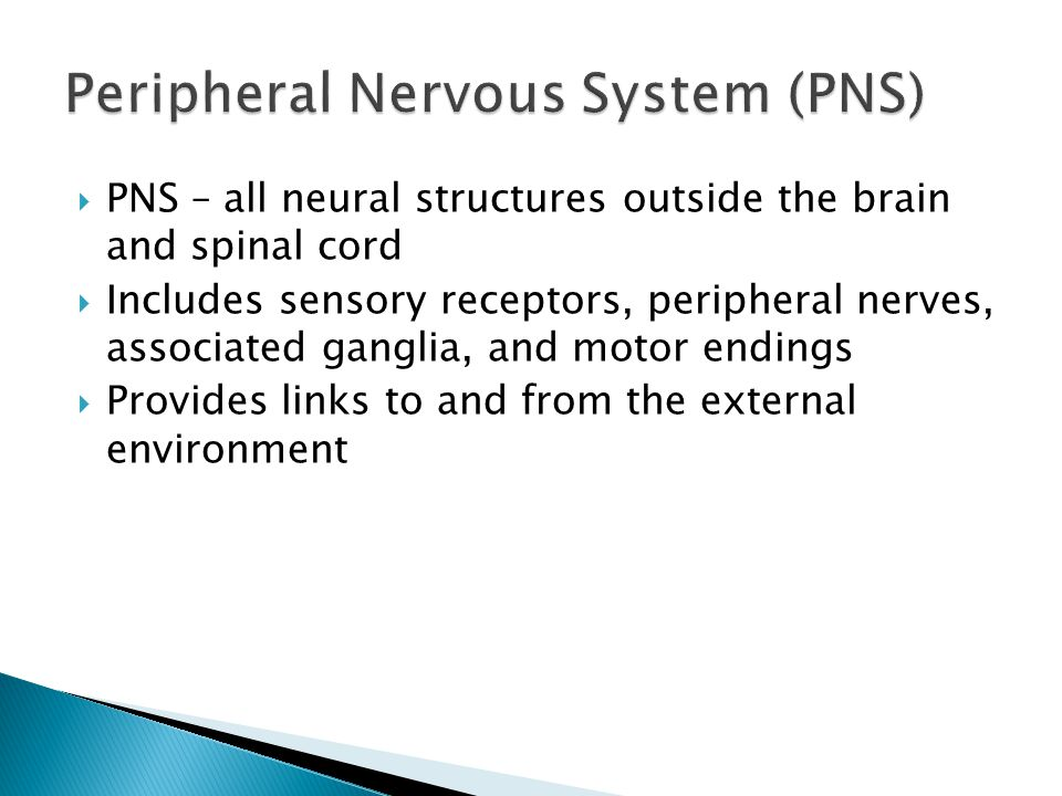 PNS – all neural structures outside the brain and spinal cord Includes sensory receptors, peripheral nerves, associated ganglia, and motor endings Pro