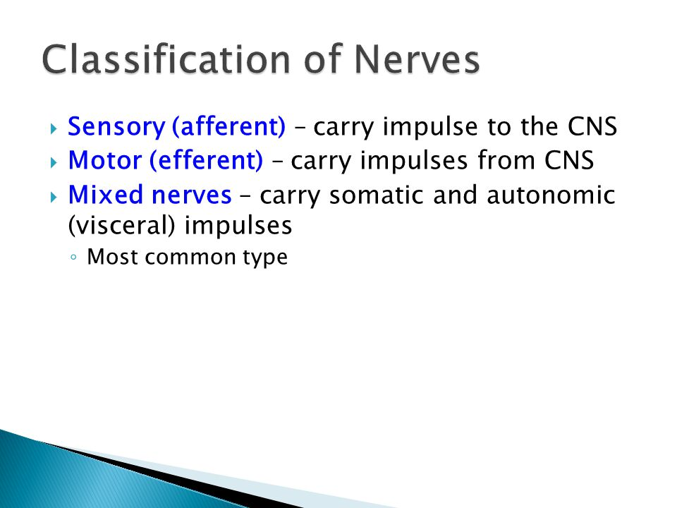 Sensory (afferent) – carry impulse to the CNS Motor (efferent) – carry impulses from CNS Mixed nerves – carry somatic and autonomic (visceral) impulse