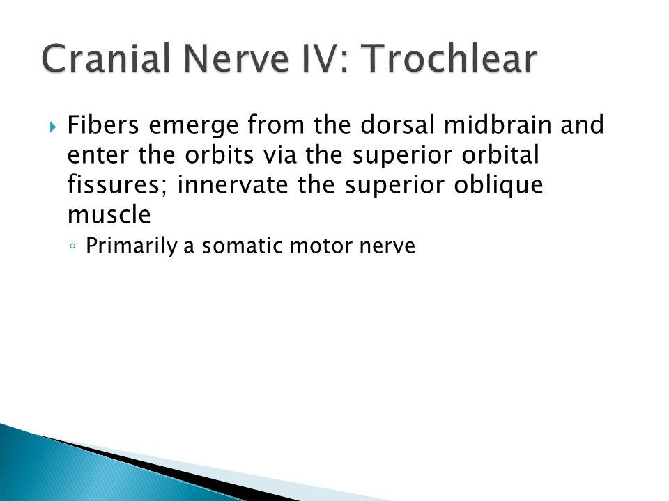 Fibers emerge from the dorsal midbrain and enter the orbits via the superior orbital fissures; innervate the superior oblique muscle Primarily a somat