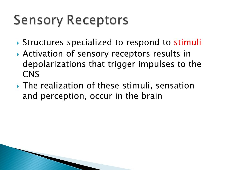 Structures specialized to respond to stimuli Activation of sensory receptors results in depolarizations that trigger impulses to the CNS The realizati