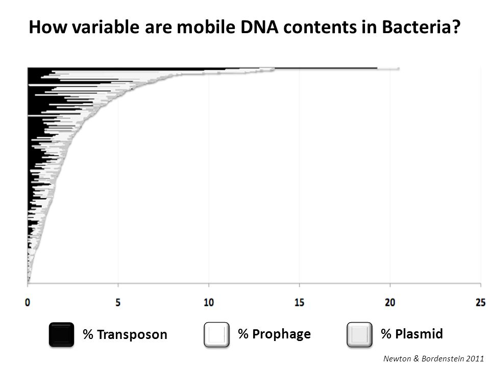 How variable are mobile DNA contents in Bacteria.