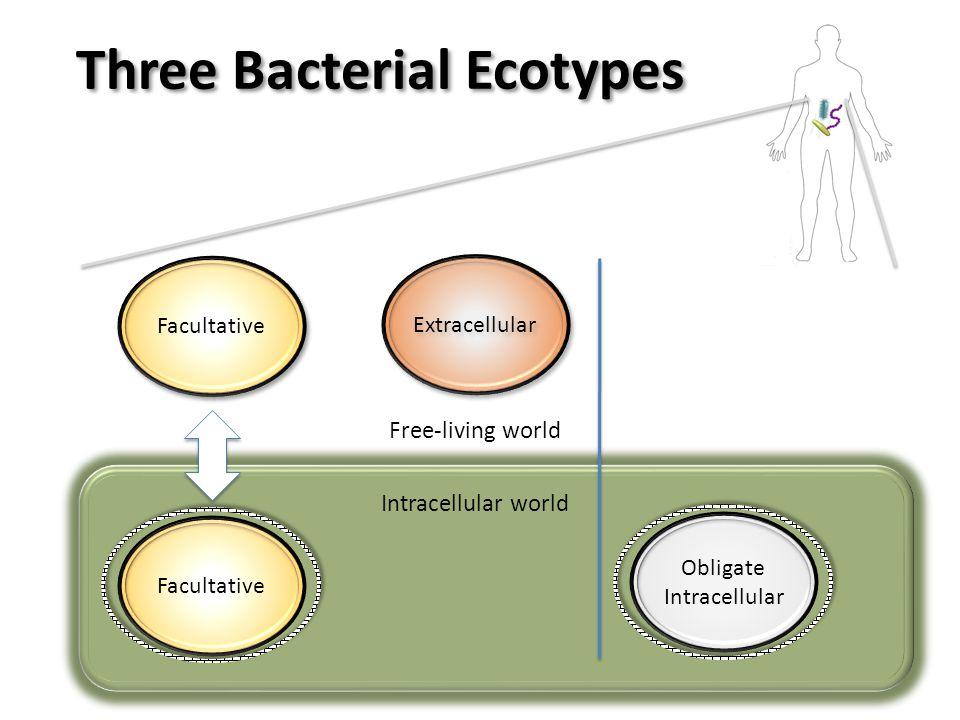 Facultative Intracellular world Facultative Extracellular Free-living world Obligate Intracellular Three Bacterial Ecotypes