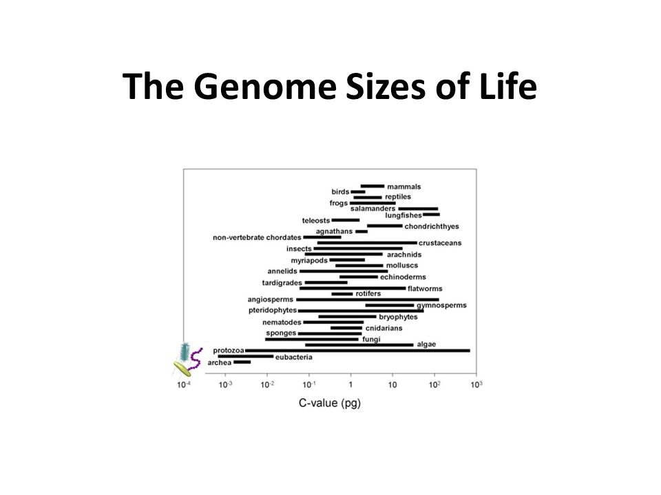 The Genome Sizes of Life
