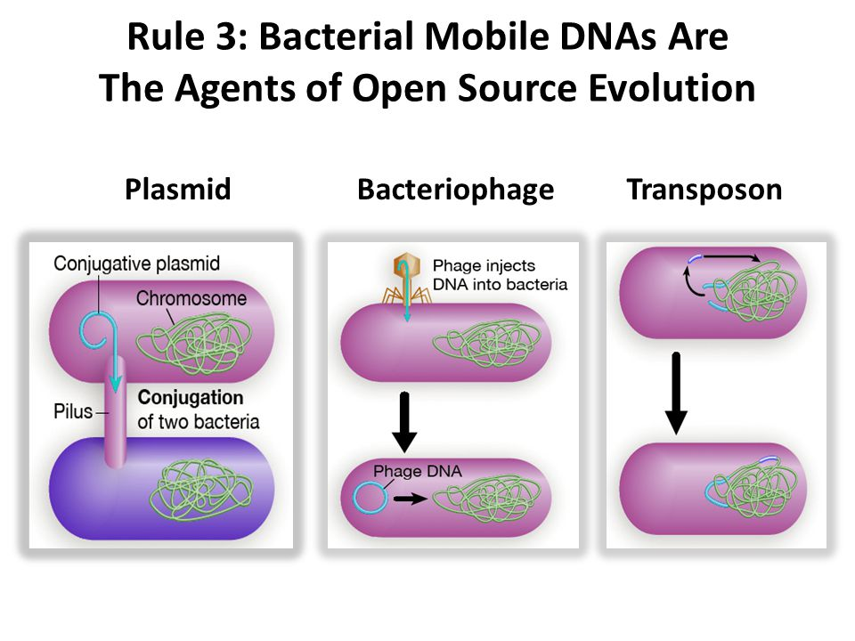 BacteriophageTransposonPlasmid Rule 3: Bacterial Mobile DNAs Are The Agents of Open Source Evolution