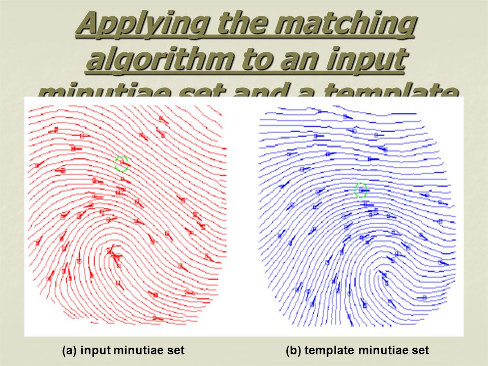 Applying the matching algorithm to an input minutiae set and a template (a) input minutiae set(b) template minutiae set