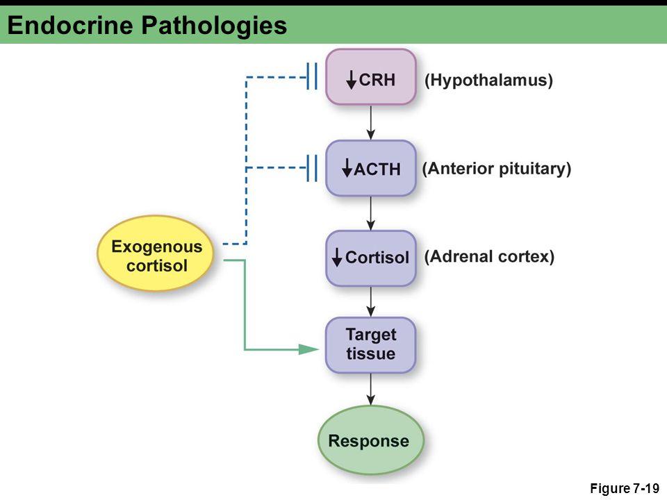 Endocrine Pathologies Figure 7-19