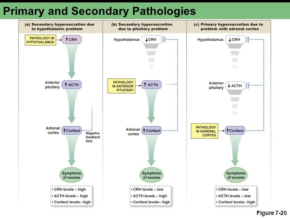 Primary and Secondary Pathologies Figure 7-20