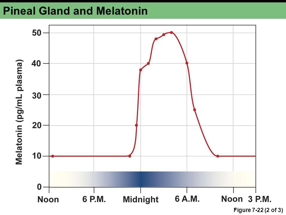 Pineal Gland and Melatonin Figure 7-22 (2 of 3)