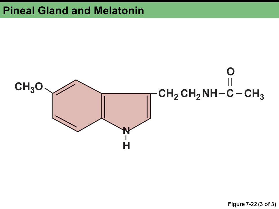 Pineal Gland and Melatonin Figure 7-22 (3 of 3)