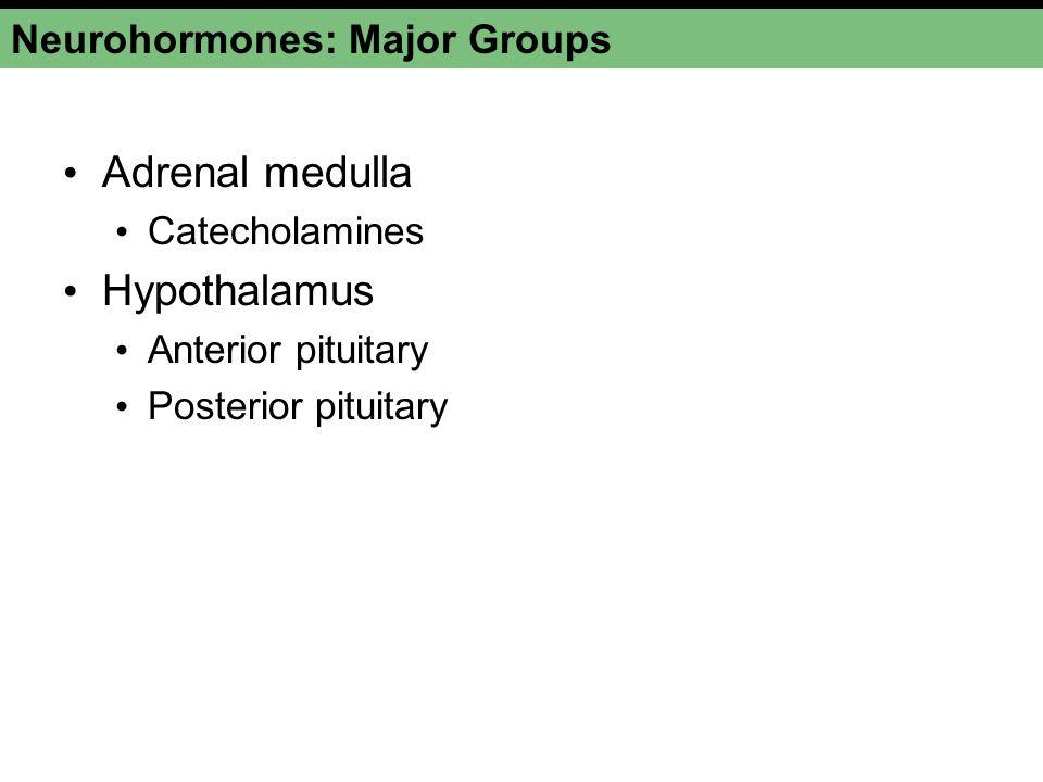 Neurohormones: Major Groups Adrenal medulla Catecholamines Hypothalamus Anterior pituitary Posterior pituitary