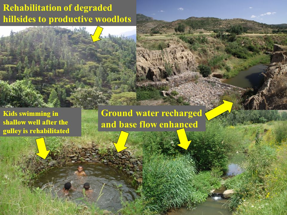 Rehabilitation of degraded hillsides to productive woodlots Ground water recharged and base flow enhanced Kids swimming in shallow well after the gull