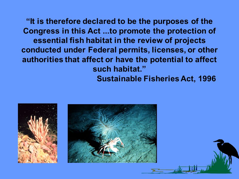It is therefore declared to be the purposes of the Congress in this Act...to promote the protection of essential fish habitat in the review of projects conducted under Federal permits, licenses, or other authorities that affect or have the potential to affect such habitat.