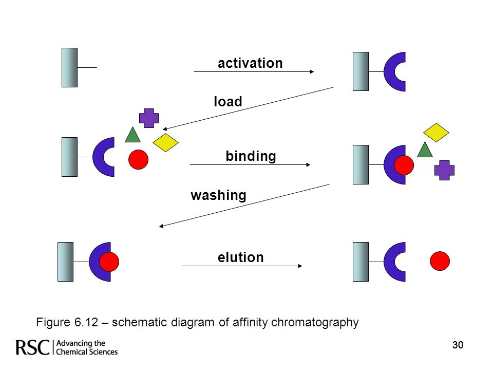 30 elution activation load binding washing Figure 6.12 – schematic diagram of affinity chromatography