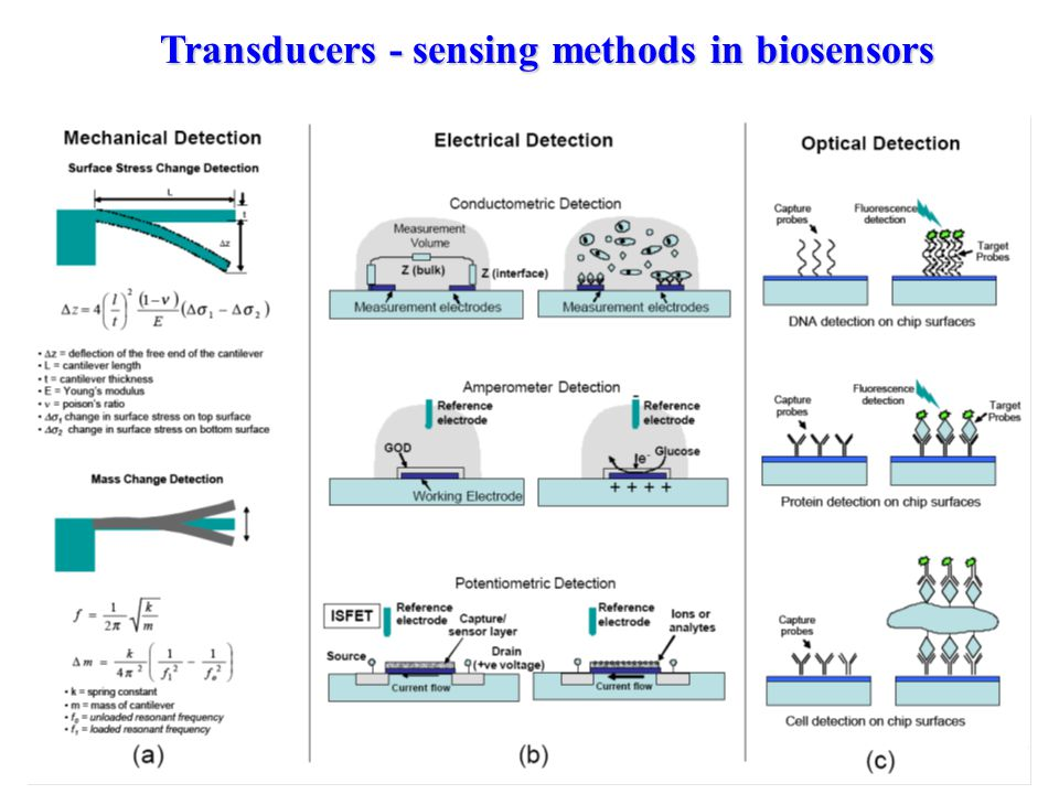 R. Almog Transducers - sensing methods in biosensors