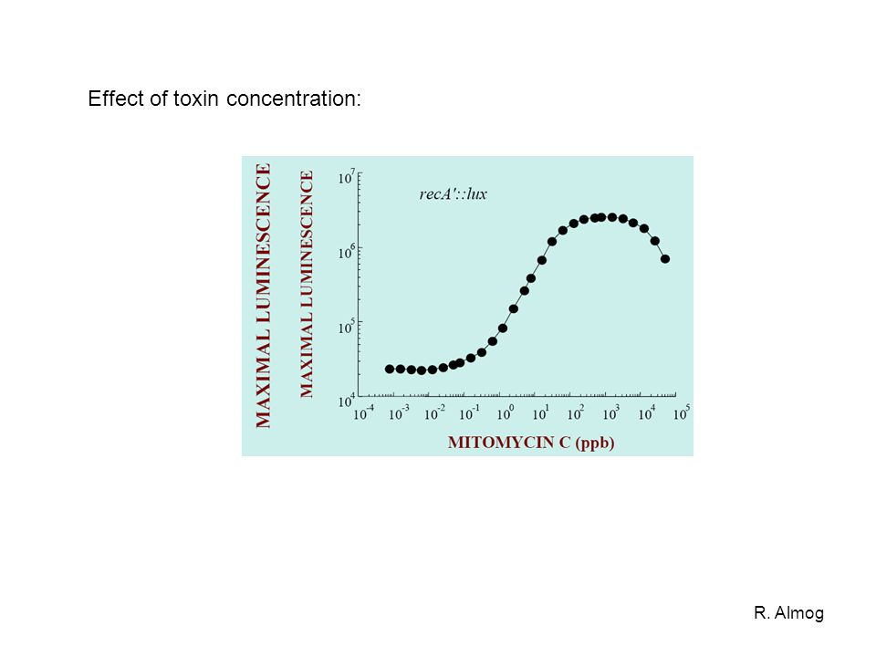 R. Almog Effect of toxin concentration:
