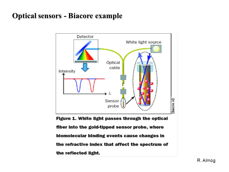 R. Almog Optical sensors - Biacore example