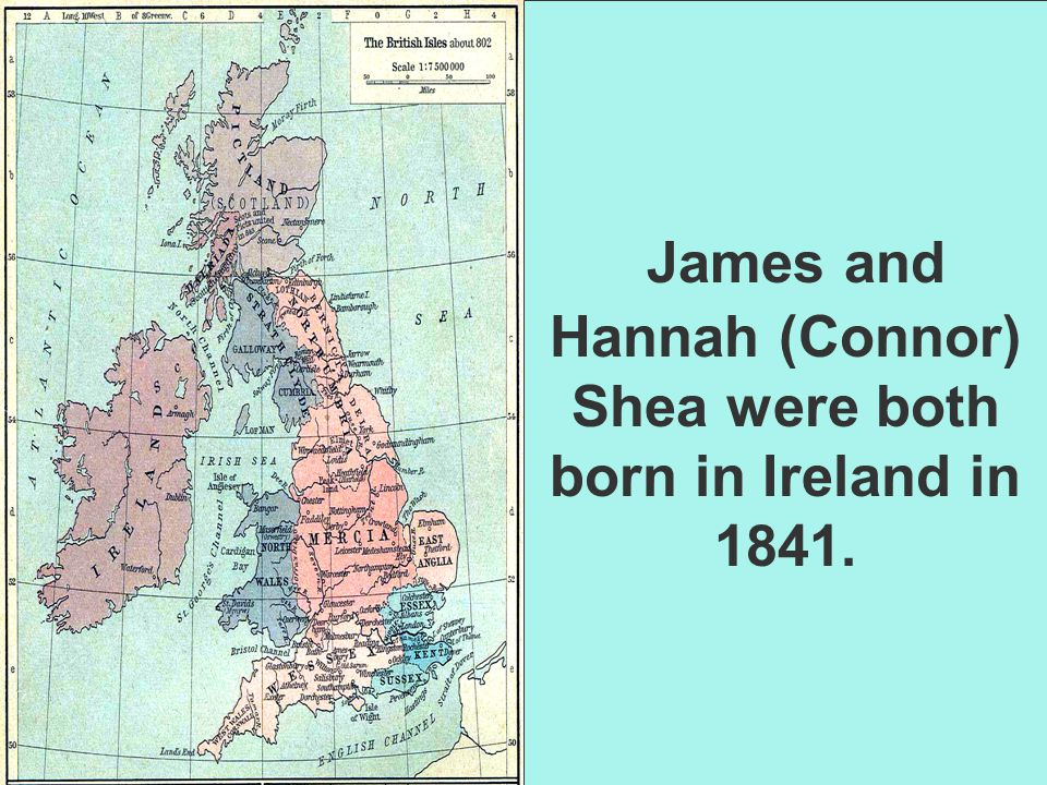 James and Hannah (Connor) Shea were both born in Ireland in 1841.