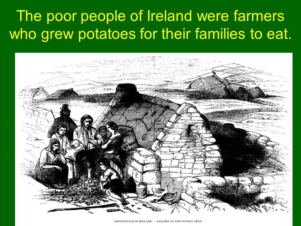 While James and Hannah were children, the potato crop of Ireland failed.