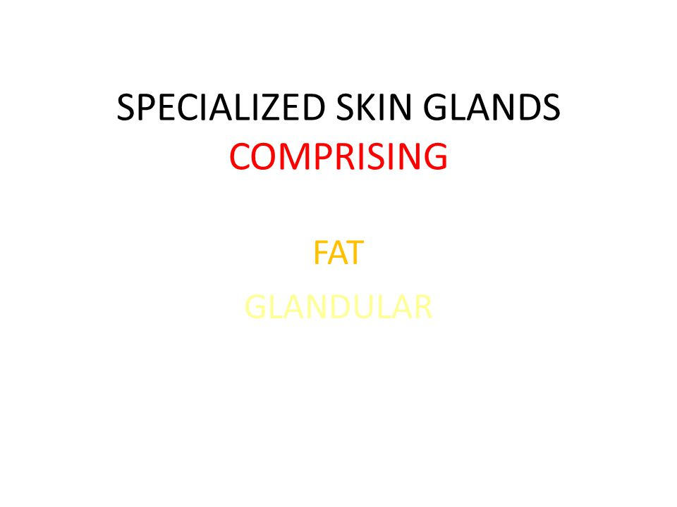 SPECIALIZED SKIN GLANDS COMPRISING FAT GLANDULAR