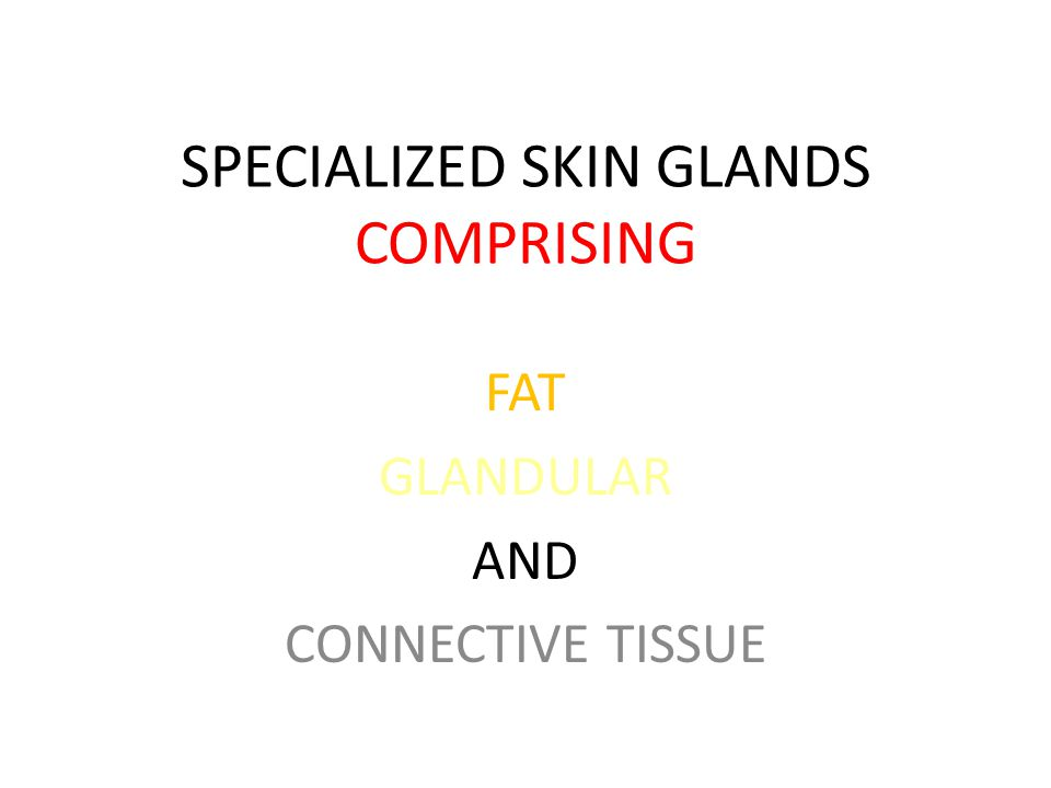 SPECIALIZED SKIN GLANDS COMPRISING FAT GLANDULAR AND CONNECTIVE TISSUE