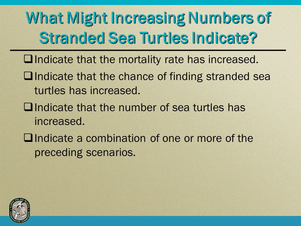 What Might Increasing Numbers of Stranded Sea Turtles Indicate.