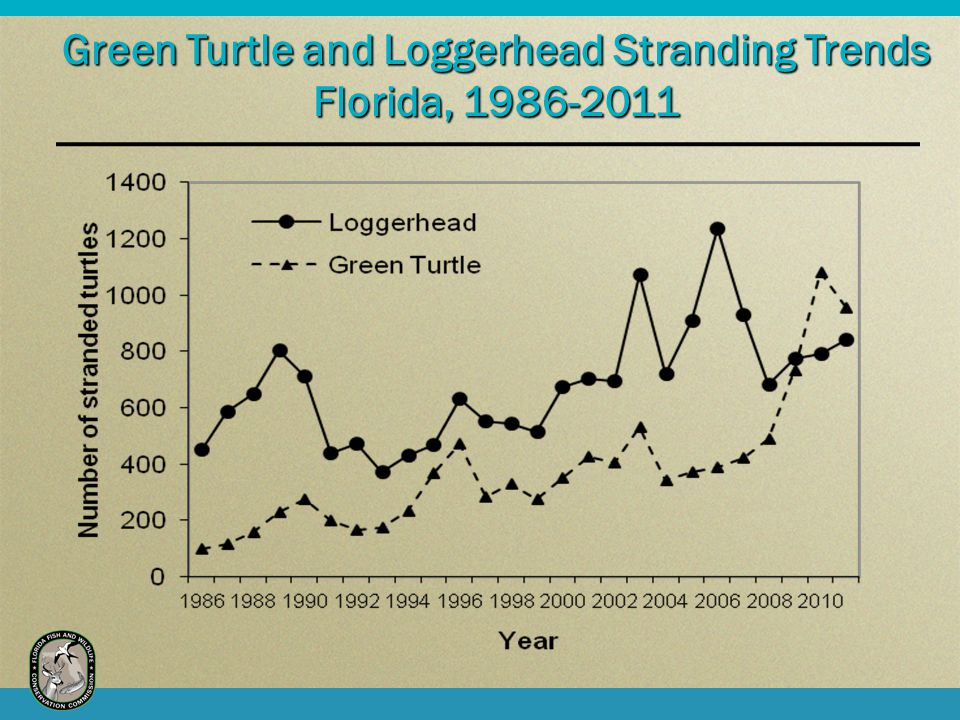 Green Turtle and Loggerhead Stranding Trends Florida, 1986-2011