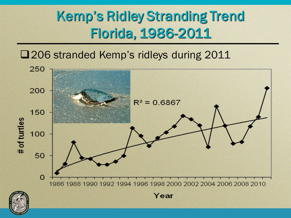 Kemps Ridley Stranding Trend Florida, 1986-2011 206 stranded Kemps ridleys during 2011