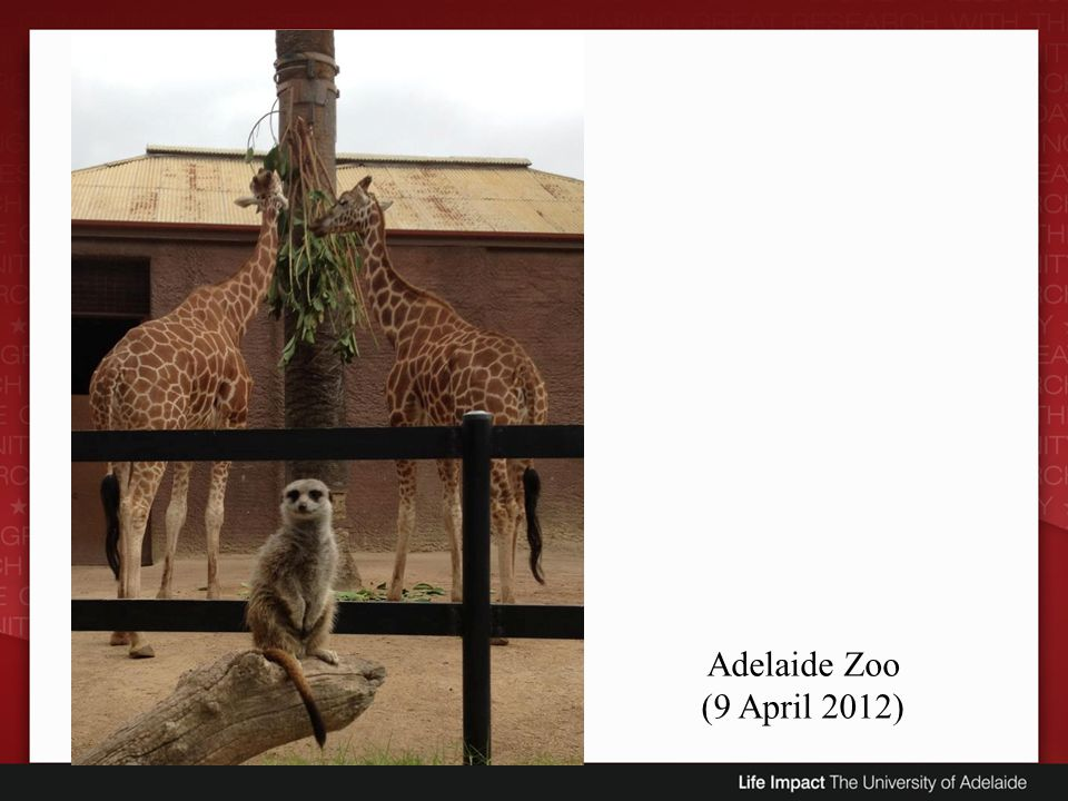 Adelaide Zoo (9 April 2012)