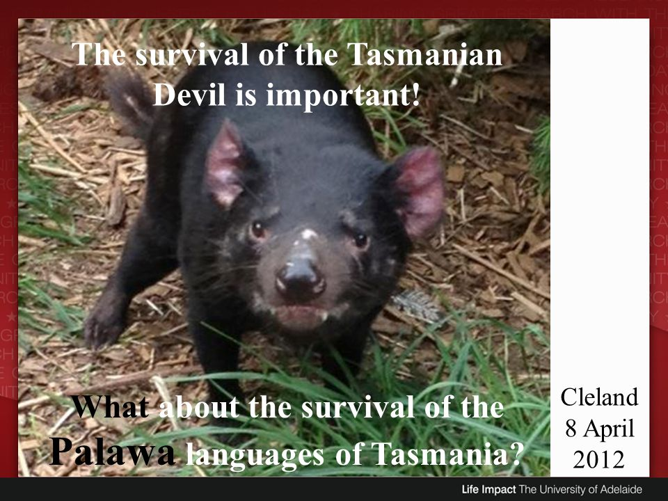 Cleland 8 April 2012 The survival of the Tasmanian Devil is important! What about the survival of the Palawa languages of Tasmania?