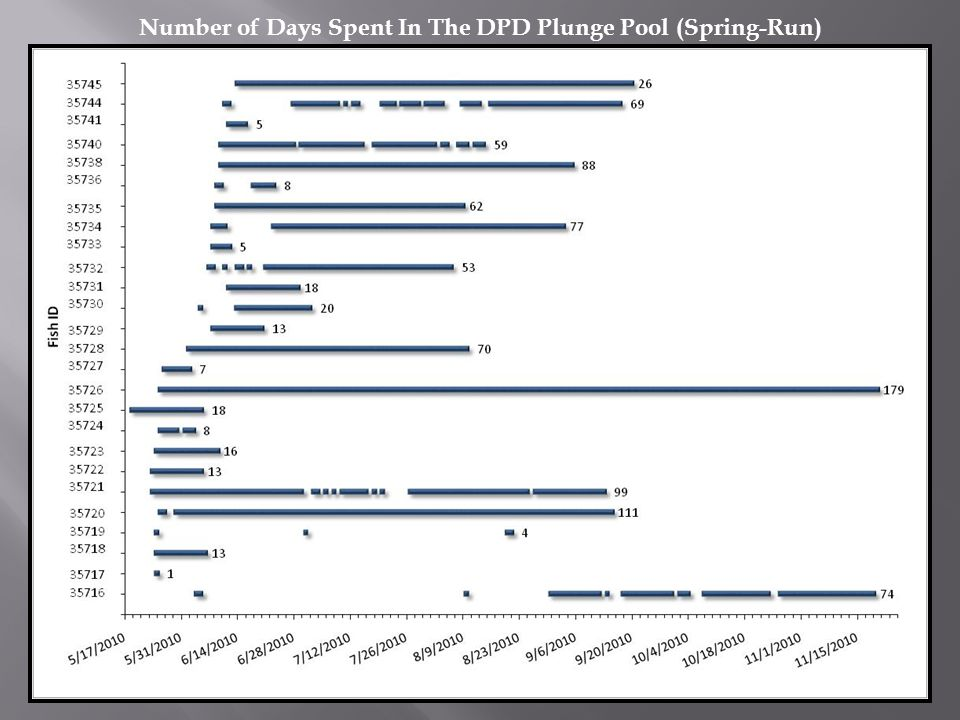 Number of Days Spent In The DPD Plunge Pool (Spring-Run)