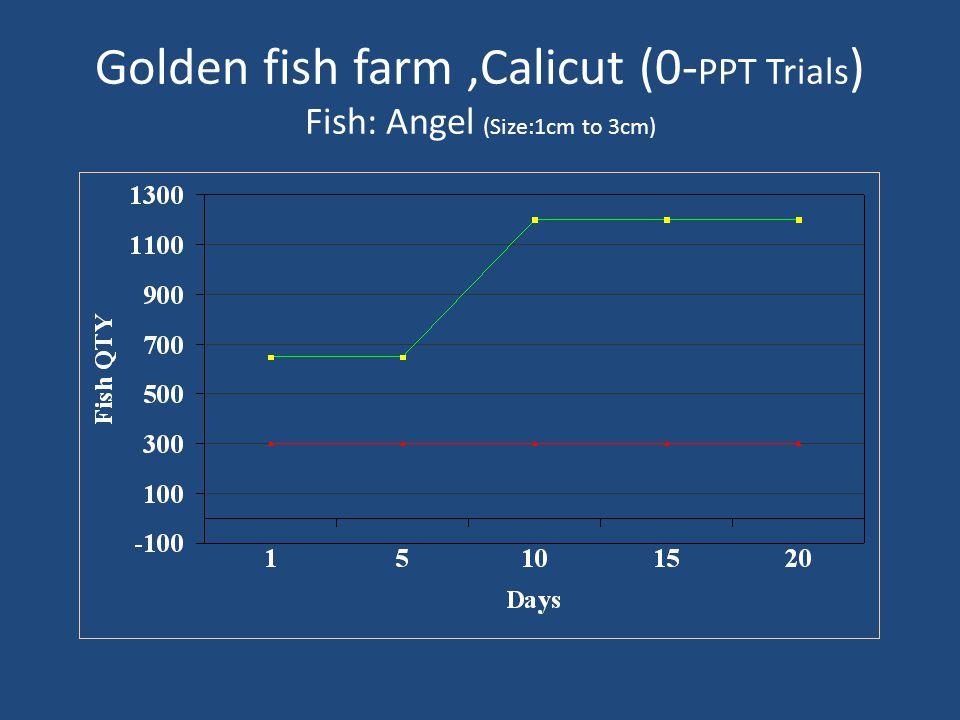 Golden fish farm,Calicut (0- PPT Trials ) Fish: Angel (Size:1cm to 3cm)
