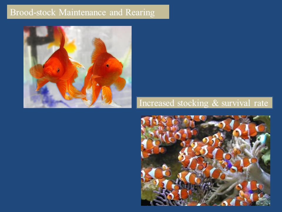 Brood-stock Maintenance and Rearing Increased stocking & survival rate