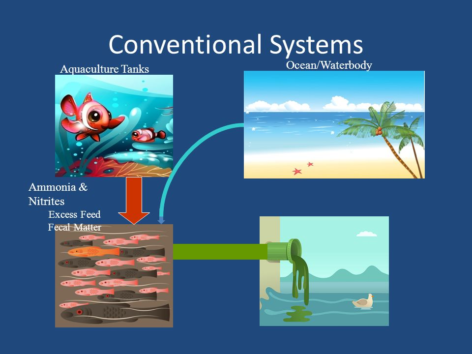 Conventional Systems Aquaculture Tanks Ammonia & Nitrites Excess Feed Fecal Matter Ocean/Waterbody