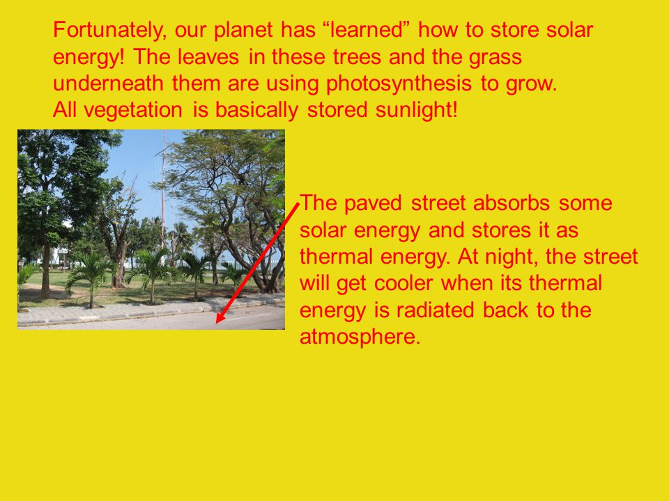 Fortunately, our planet has learned how to store solar energy! The leaves in these trees and the grass underneath them are using photosynthesis to gro