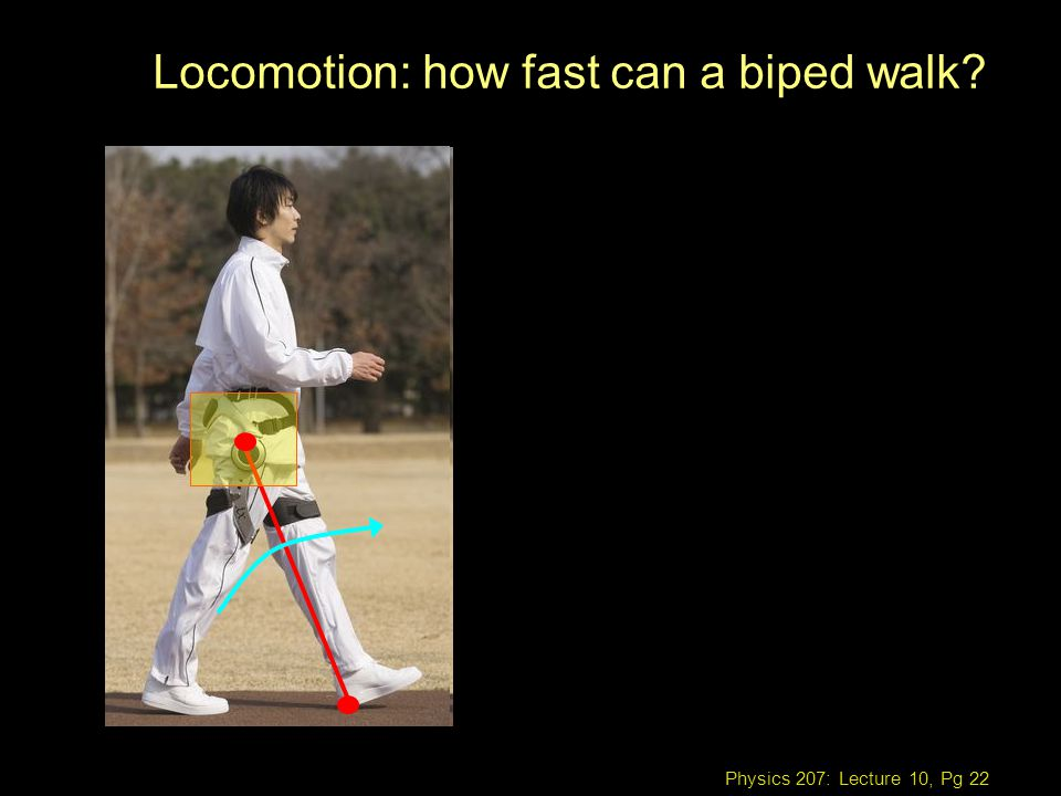 Physics 207: Lecture 10, Pg 22 Locomotion: how fast can a biped walk