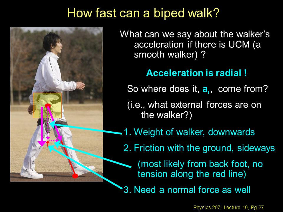 Physics 207: Lecture 10, Pg 27 How fast can a biped walk.