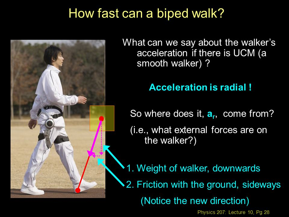 Physics 207: Lecture 10, Pg 28 How fast can a biped walk.