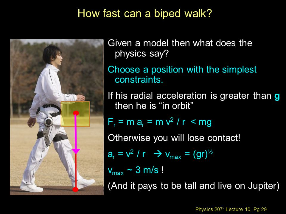 Physics 207: Lecture 10, Pg 29 How fast can a biped walk.