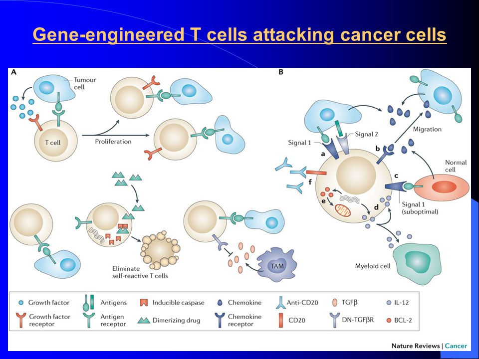 Gene-engineered T cells attacking cancer cells