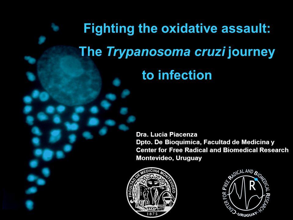 Life cycle of Trypanosoma cruzi Triparedoxina peroxidasa Ascorbato peroxidasa Triparedoxina Tripanotiona sintetasa Fe-Superóxido Dismutasa Adapted from The Trypanosoma cruzi Proteome Atwood III et al; Science Vol 309; 2005
