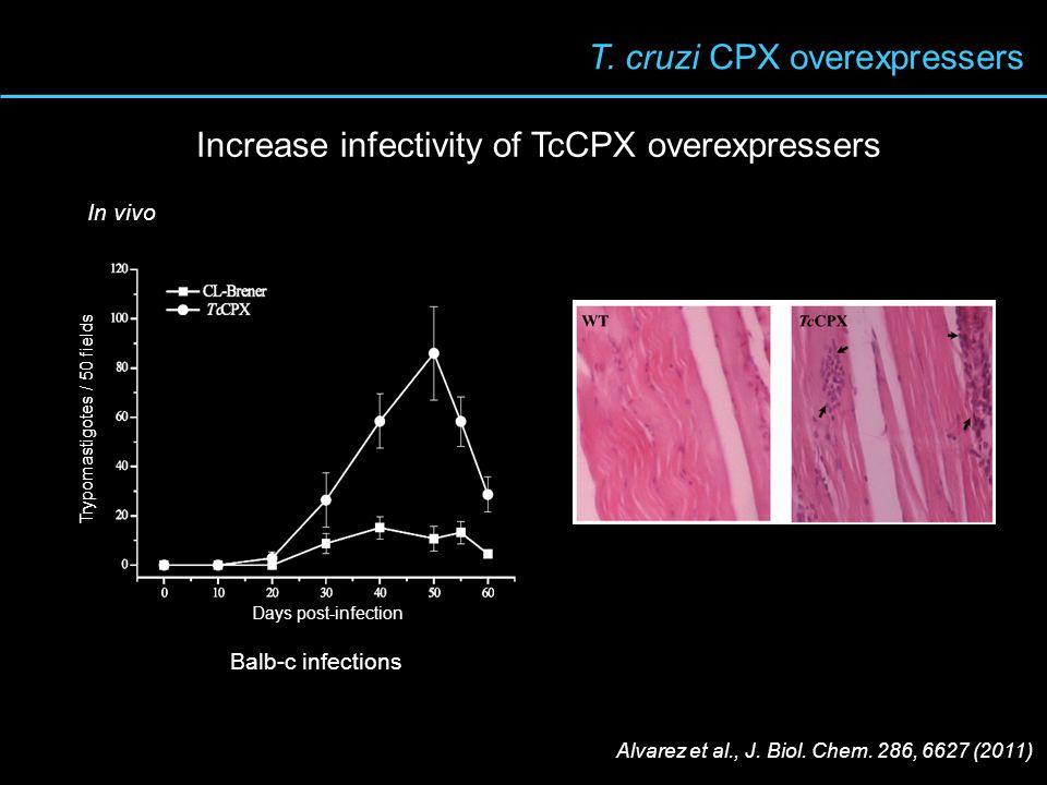 T. cruzi CPX overexpressers Balb-c infections In vivo Days post-infection Trypomastigotes / 50 fields Alvarez et al., J. Biol. Chem. 286, 6627 (2011)