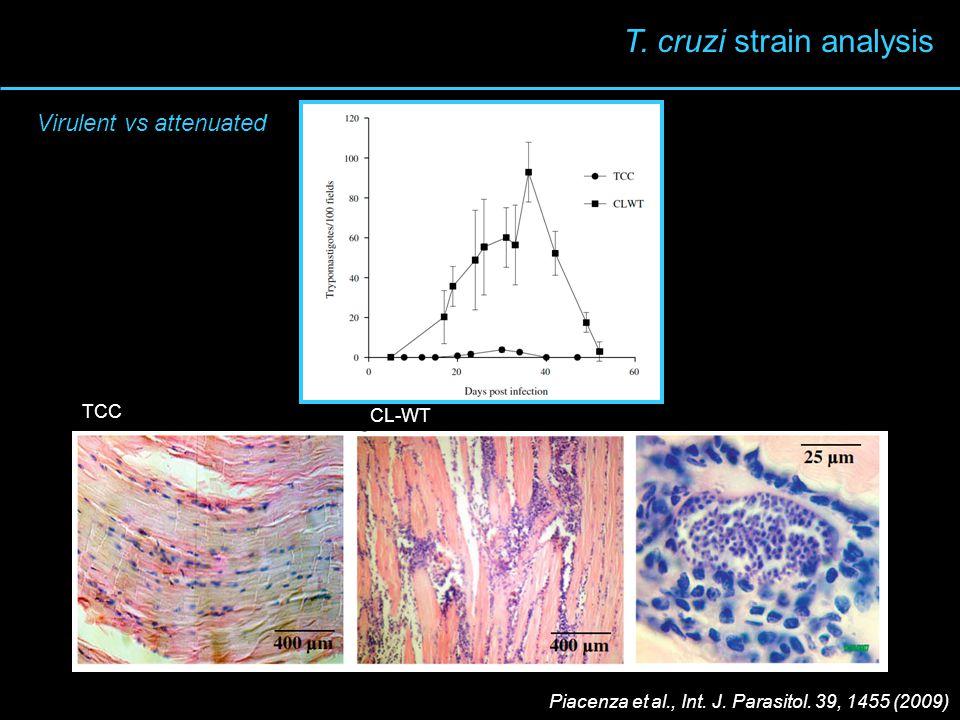 TCC CL-WT T. cruzi strain analysis Piacenza et al., Int. J. Parasitol. 39, 1455 (2009) Virulent vs attenuated