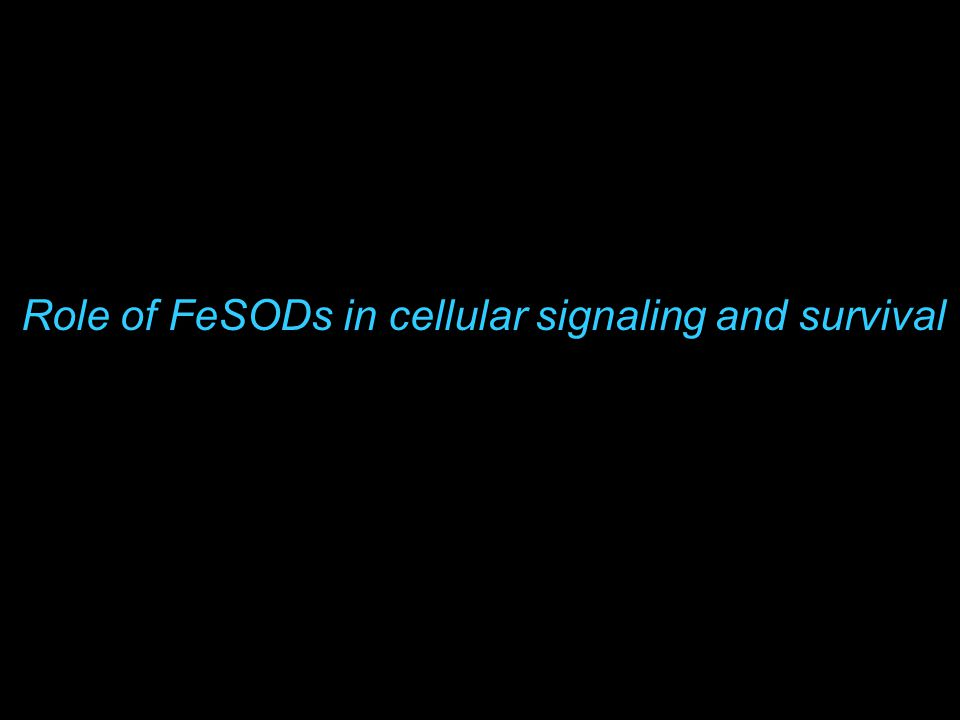 Role of FeSODs in cellular signaling and survival