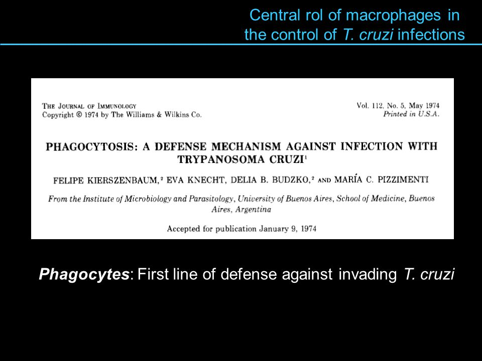 Central rol of macrophages in the control of T. cruzi infections Phagocytes: First line of defense against invading T. cruzi