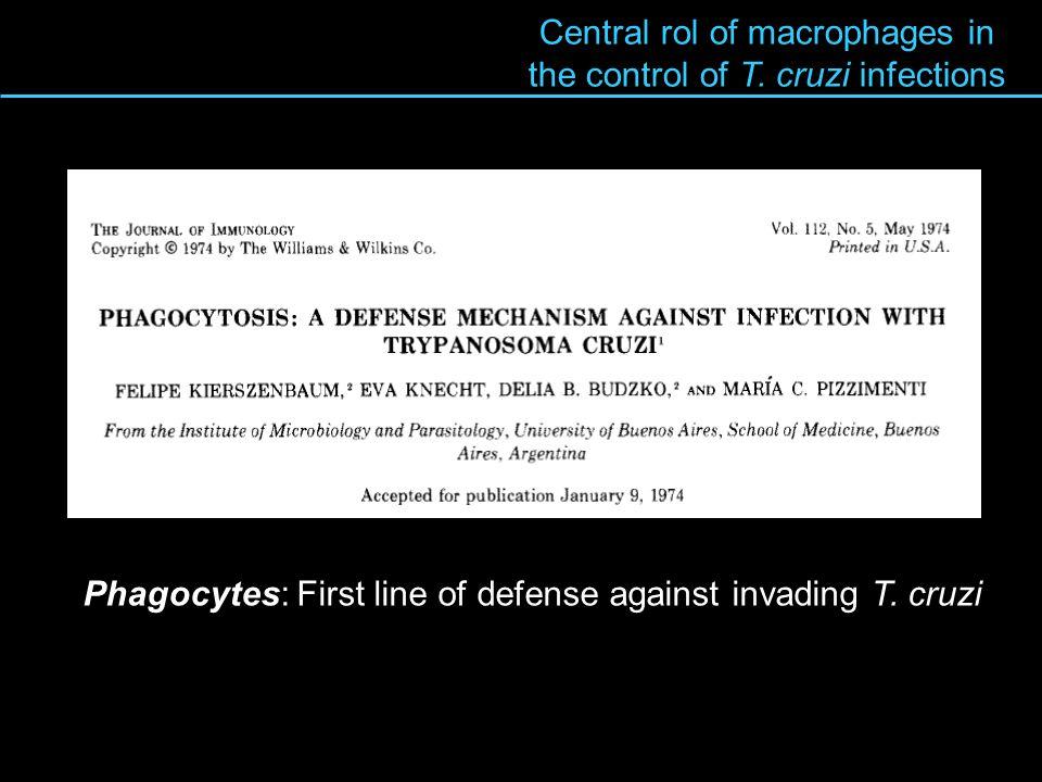 Macrophage-T cruzi interactions Villalta et al, 1984 8 min Rapid activation of NADP(H) oxidase during phagocytosis 2 O 2 + NADPH 2 O 2 – + NADP + + H + NBT DAPI NBT 2+ + O 2 NBT + + O 2 2NBT + F + + NBT 2+