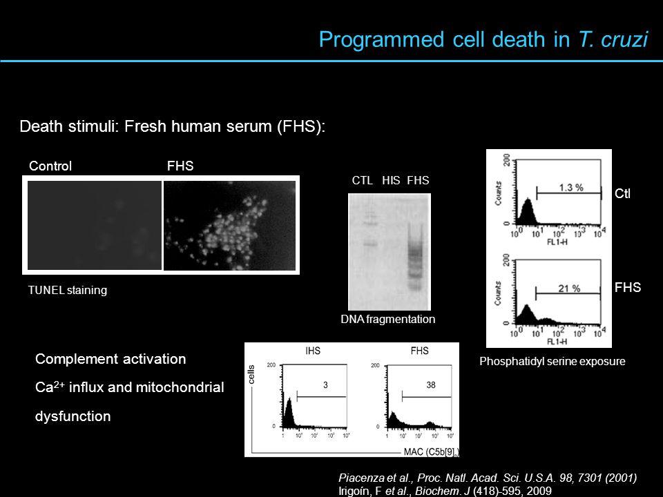 Programmed cell death in T. cruzi TUNEL staining Death stimuli: Fresh human serum (FHS): Control FHS CTL HIS FHS DNA fragmentation Phosphatidyl serine