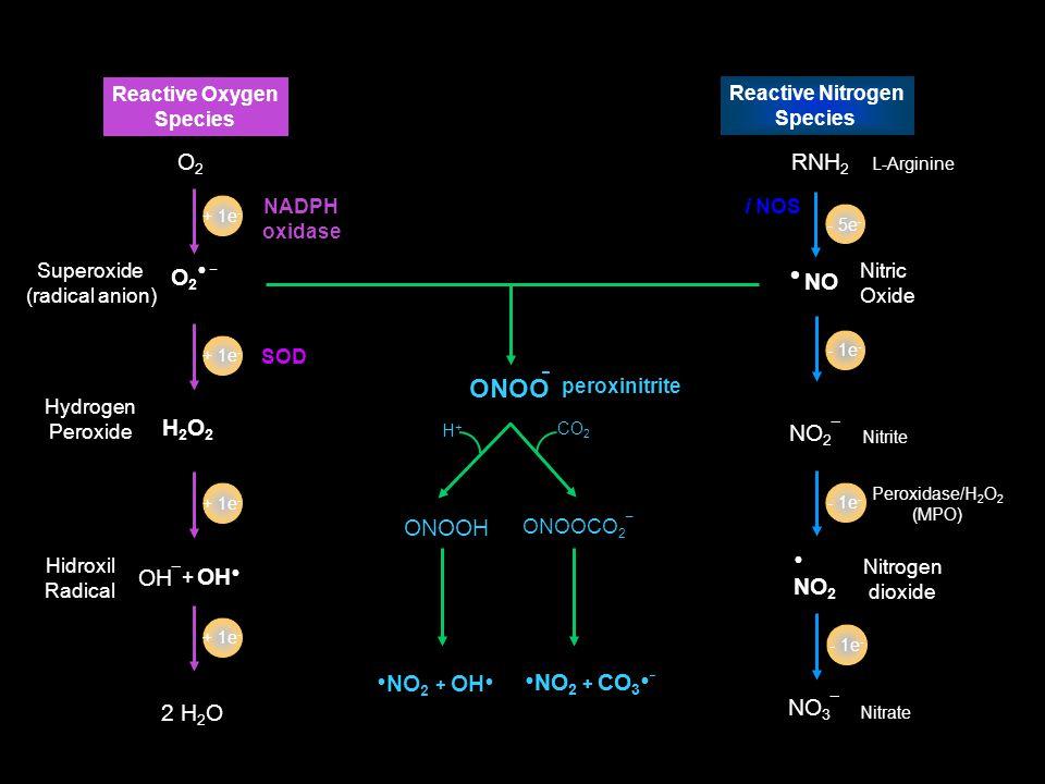 NO Nitric Oxide NO 2 ¯ Nitrite Nitrogen dioxide NO 2 NO 3 ¯ Nitrate RNH 2 L-Arginine - 1e - i NOS Reactive Nitrogen Species Peroxidase/H 2 O 2 (MPO) -