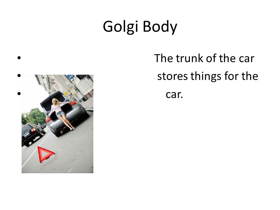 Golgi Body The trunk of the car stores things for the car.