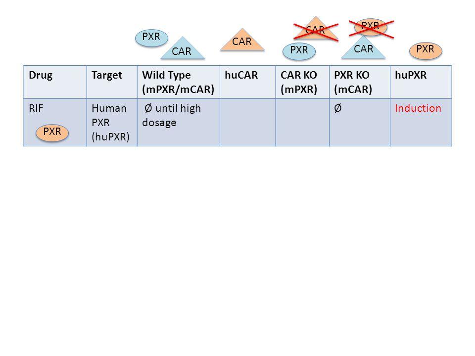 DrugTargetWild Type (mPXR/mCAR) huCARCAR KO (mPXR) PXR KO (mCAR) huPXR RIFHuman PXR (huPXR) Ø until high dosage ØInduction PXR CAR PXR CARPXR CAR PXR
