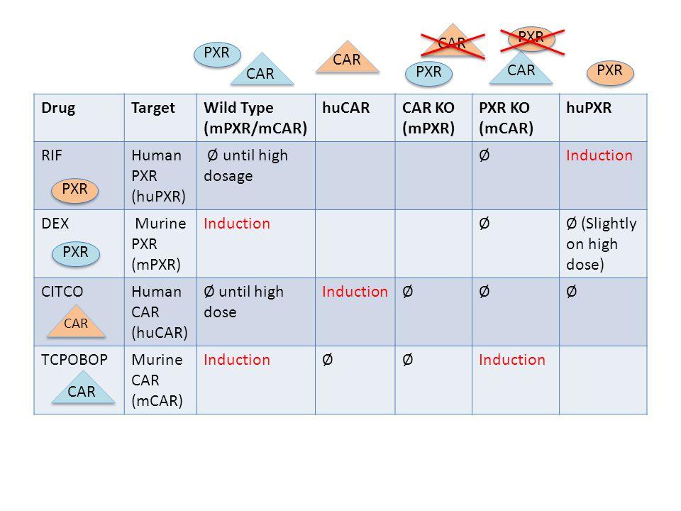 DrugTargetWild Type (mPXR/mCAR) huCARCAR KO (mPXR) PXR KO (mCAR) huPXR RIFHuman PXR (huPXR) Ø until high dosage ØInduction DEX Murine PXR (mPXR) InductionØØ (Slightly on high dose) CITCOHuman CAR (huCAR) Ø until high dose InductionØØØ TCPOBOPMurine CAR (mCAR) InductionØØ PXR CAR PXR CARPXR CAR PXR CAR